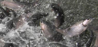 fangverbote von fischarten in meeren